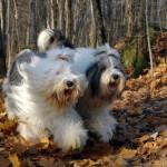 Lucky og Cherie