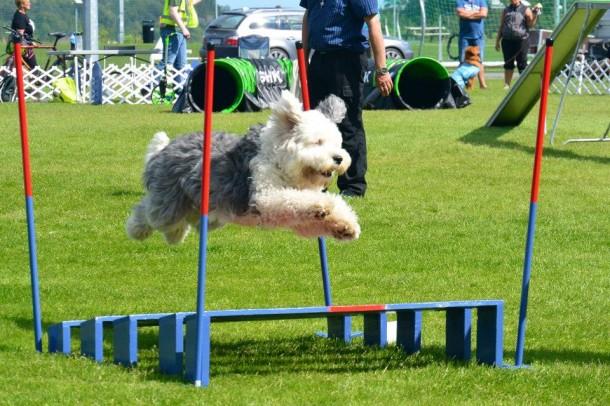 Malba flying agility