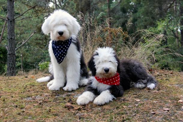 Barnaby og Nemi